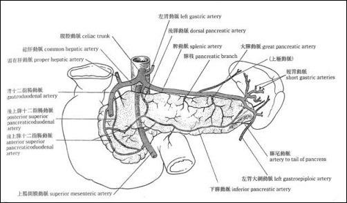 膵臓の動脈・静脈と神経とリンパ管の走行のまとめ