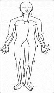 脈拍を触れることができる動脈と心拍数の増減に関わる因子